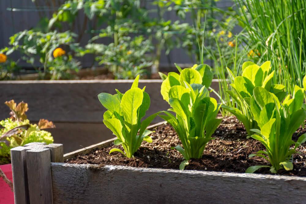 at home veggie garden