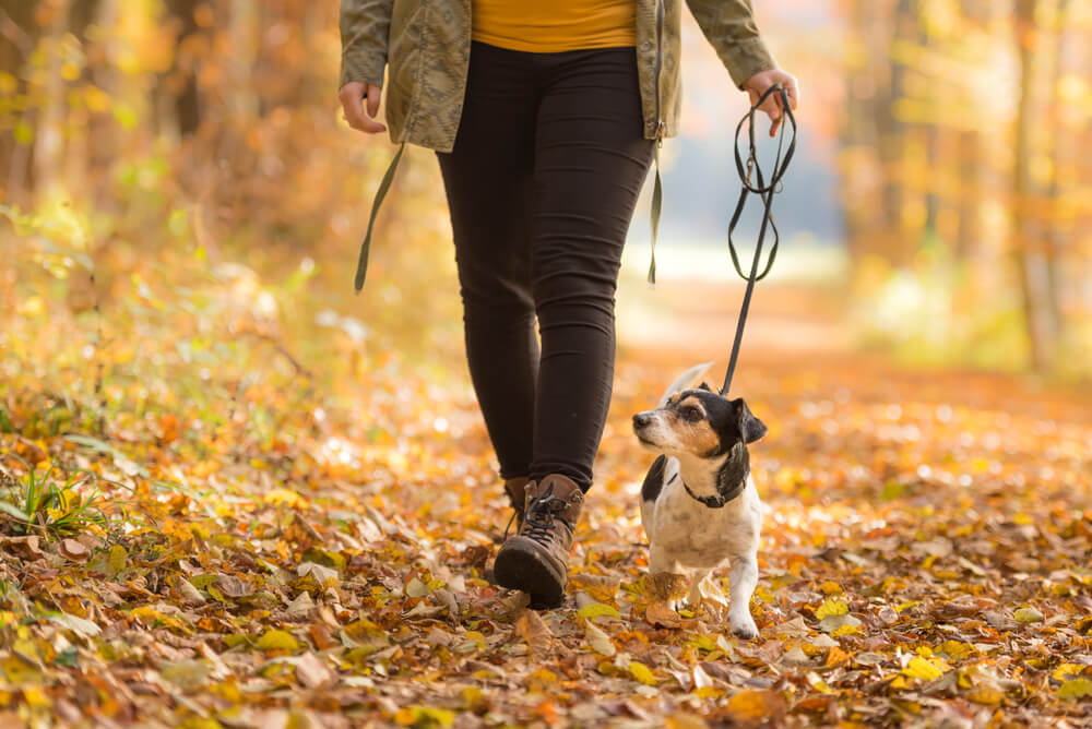 person walking a dog in the fall